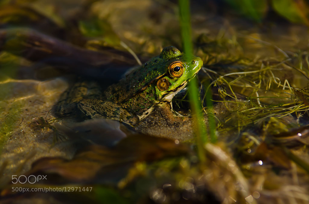 Photograph Frog by Brian Posten on 500px