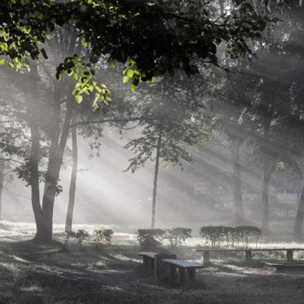 Sunny fog.