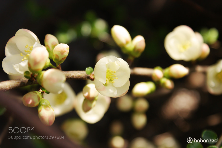 Photograph Memories of spring by Eugene W on 500px
