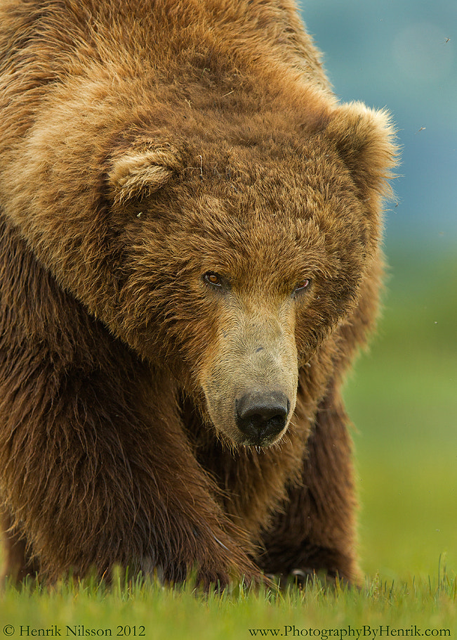 Photograph Big, Bold and Beautiful by Henrik Nilsson on 500px