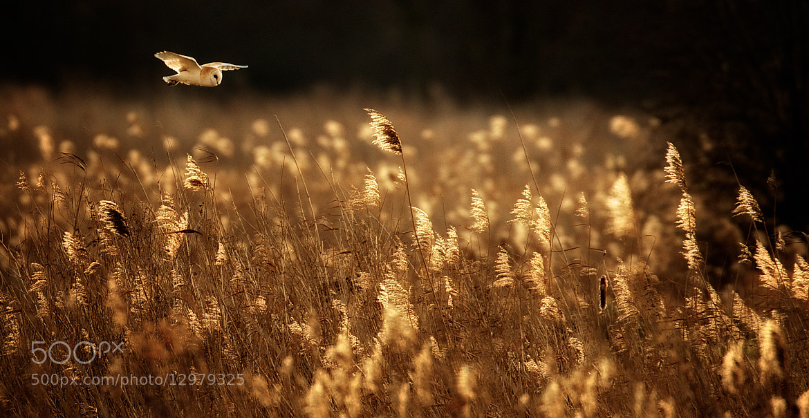 Photograph last light hunt by Mark Bridger on 500px