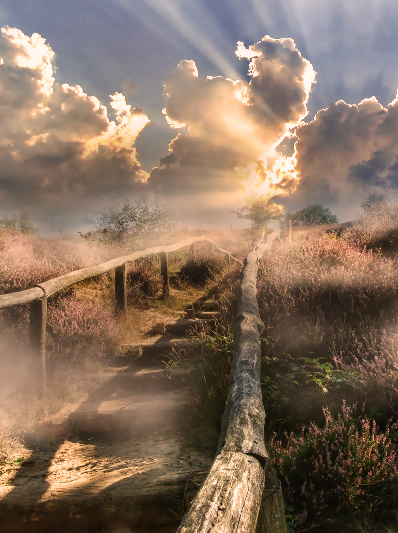 Photograph misty stairs by Patrick Strik on 500px