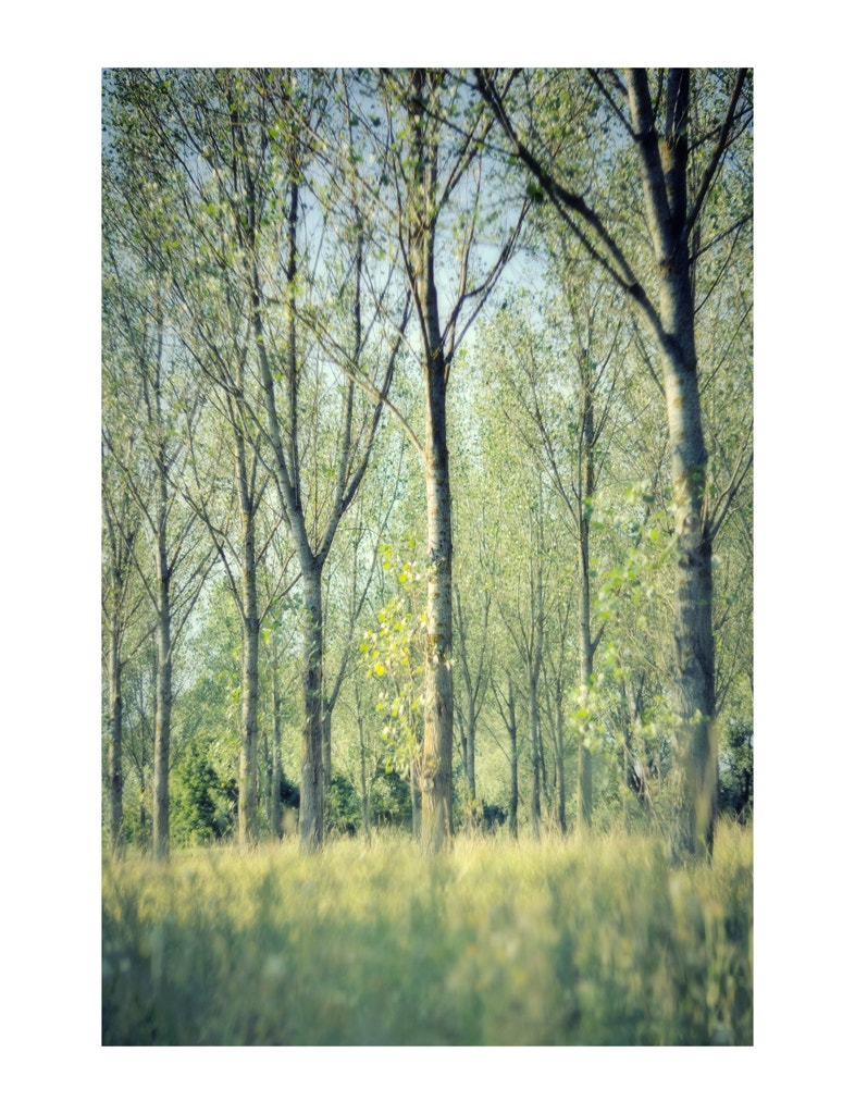 Photograph Study - Trees & colors by Gilles MOLINIER on 500px