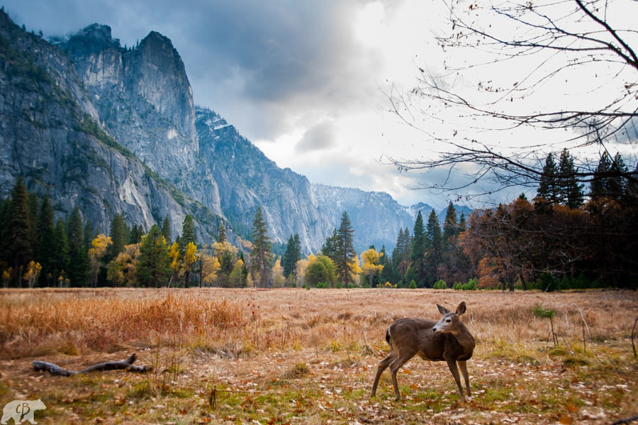 YOSEMITE by Chris  Burkard on 500px.com