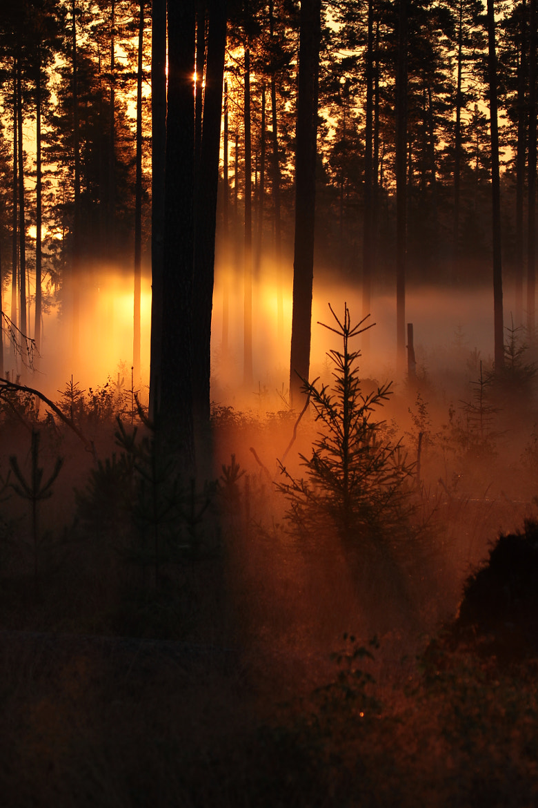 Photograph morningmist by Peter Engman on 500px