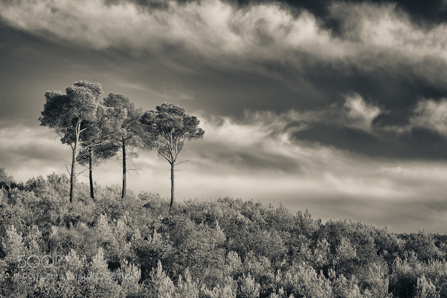 Photograph 4 Trees by Mario Moreno on 500px