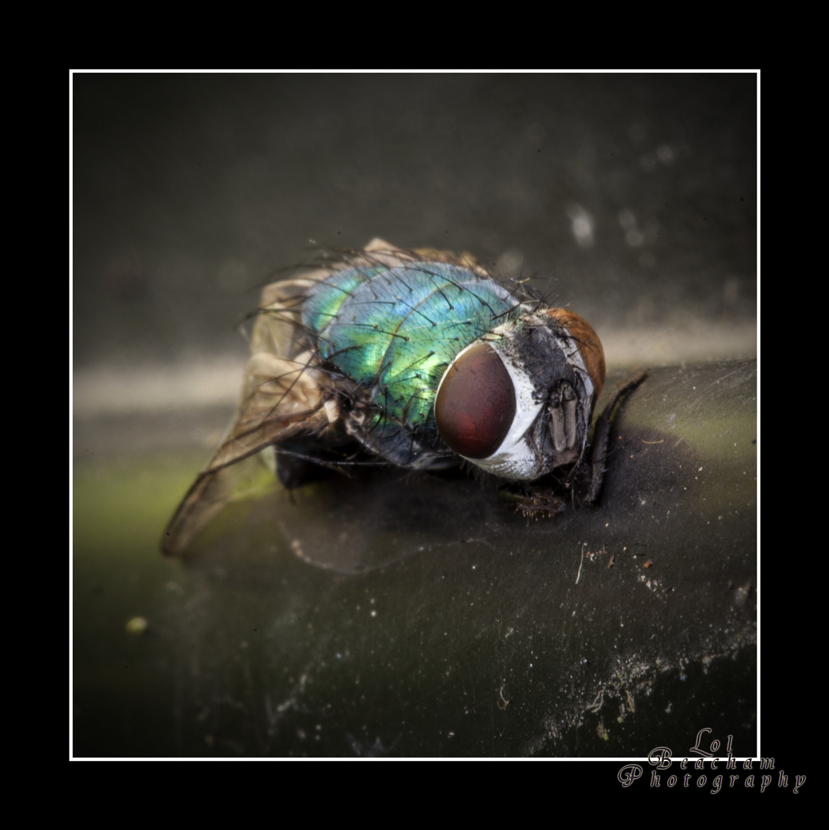 Photograph The Fly by Lol Beacham on 500px