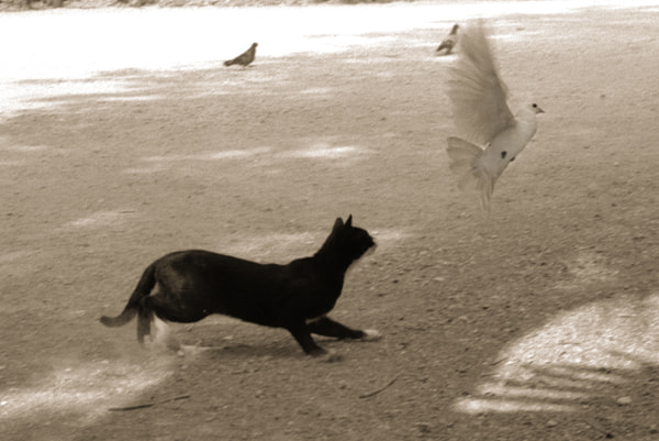 Photograph 'Cat amongst the Pigeons' - Athens by Craig Judd on 500px
