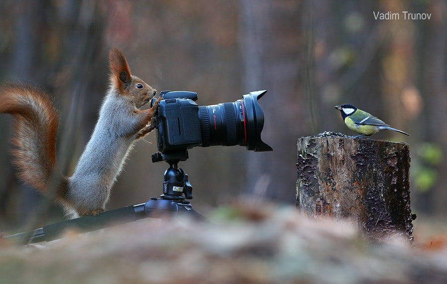 Squirrel, take a picture of me! by Vadim Trunov on 500px.com