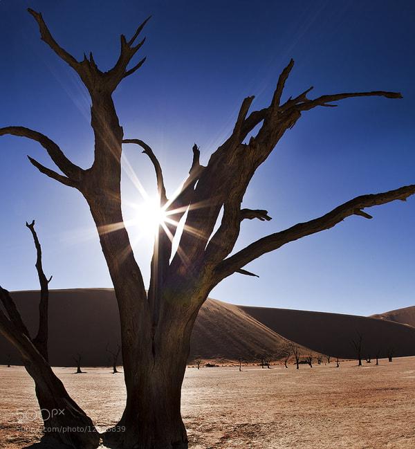Photograph Deadvlei - Namibia by David Clark on 500px