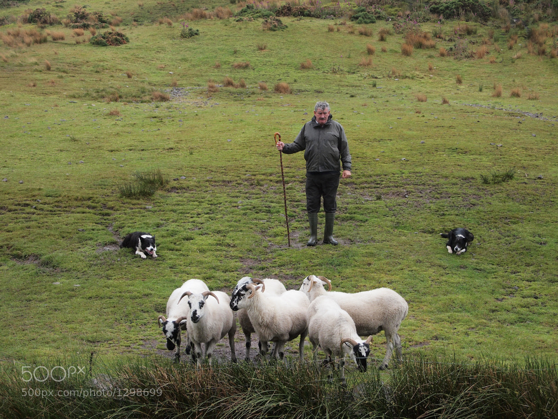 Photograph Irish shepherd by Brad Crittenden on 500px