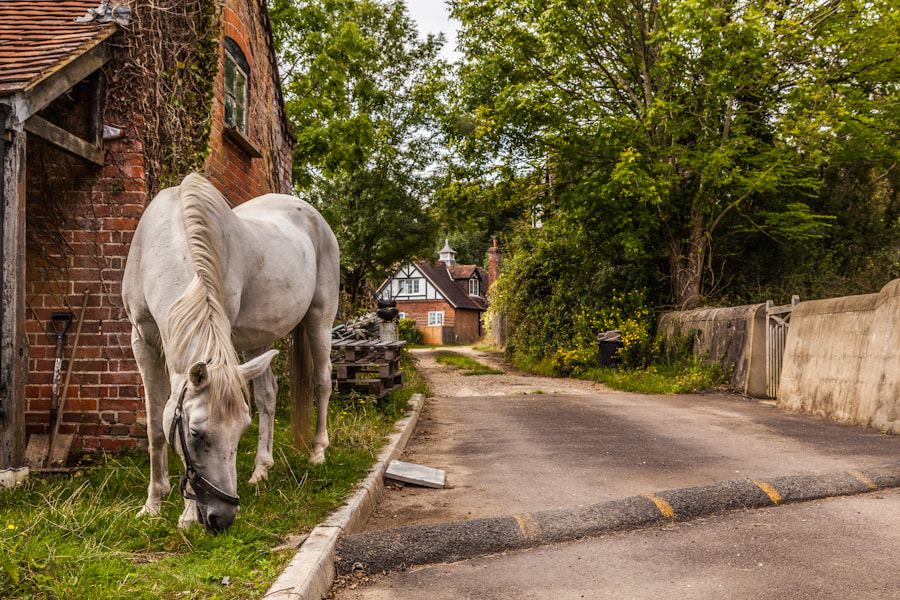 Photograph The White Horse by Martin Kemp on 500px