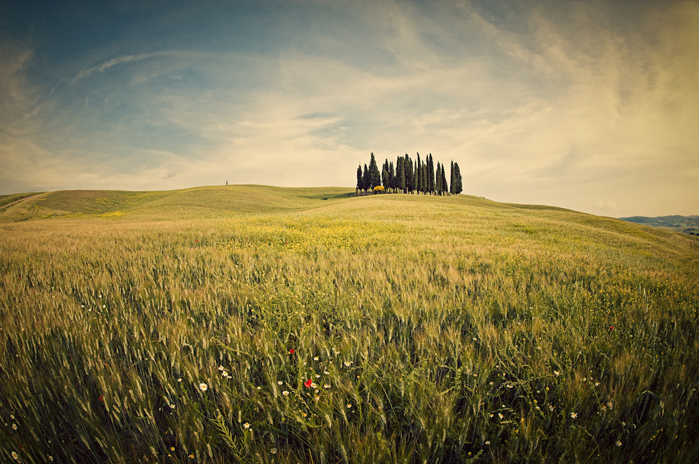 Photograph Under The Tuscan Sun by Allard Schager on 500px