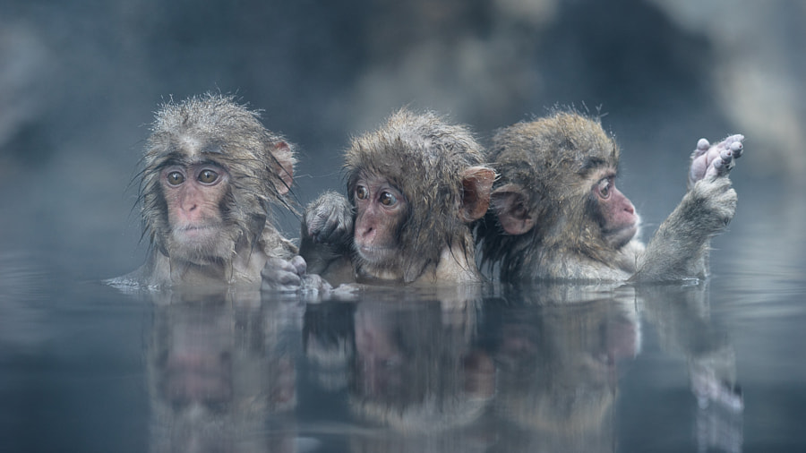 Trio by Takeshi Marumoto on 500px.com
