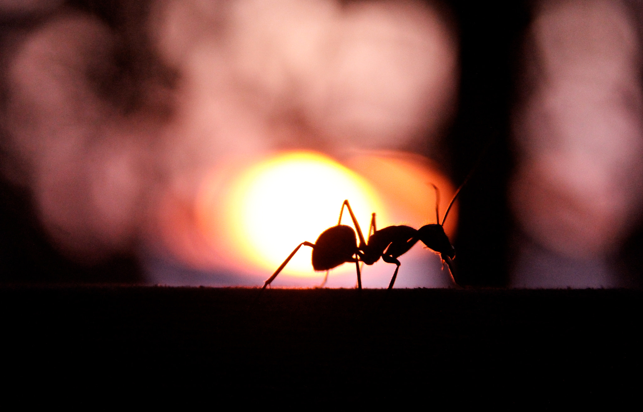 Photograph giant ant by Paolo Gatti on 500px