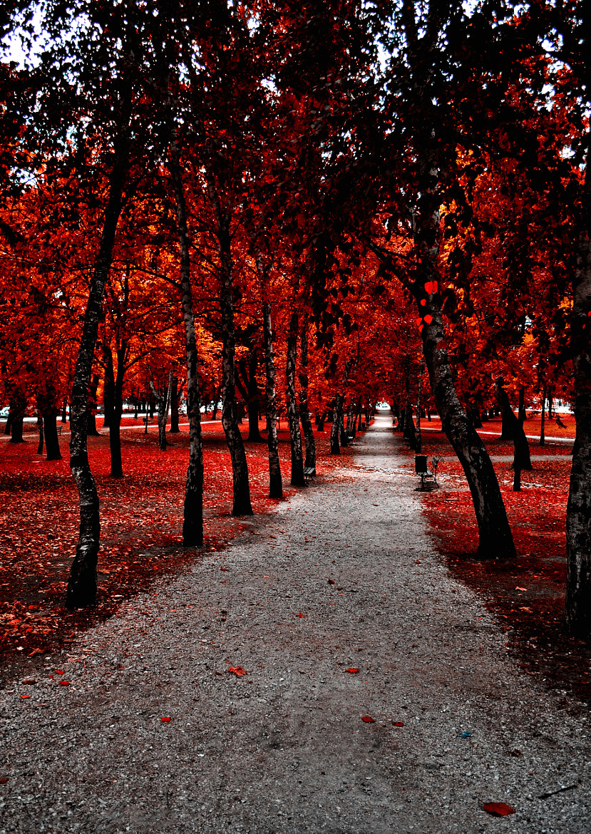 Photograph red by Zelko Noemi on 500px