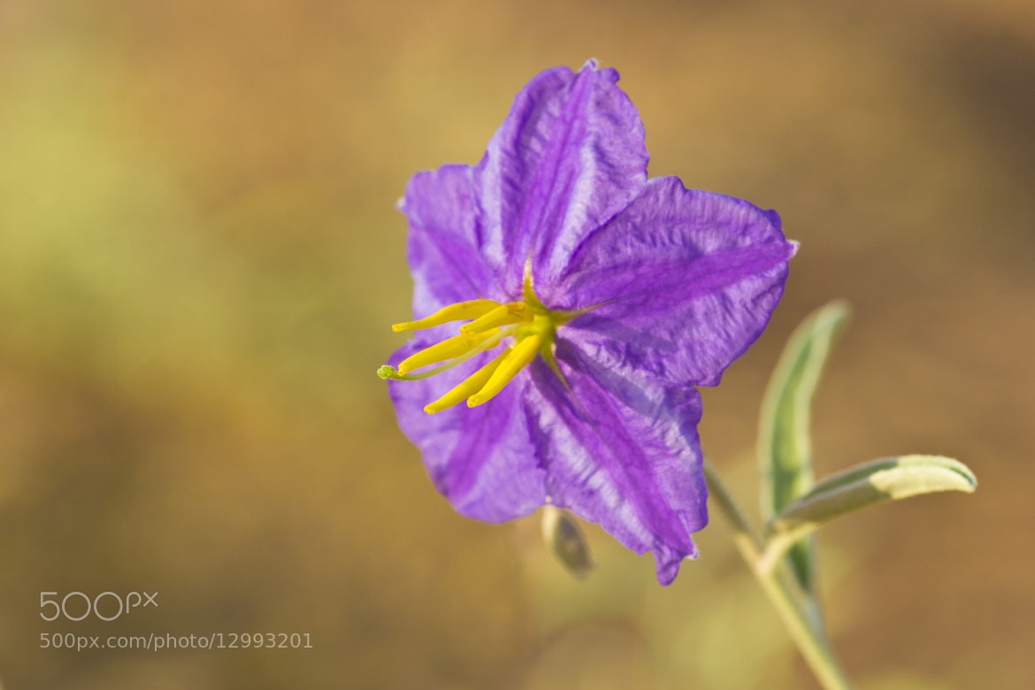 Photograph Purple! by Adel Esmael on 500px