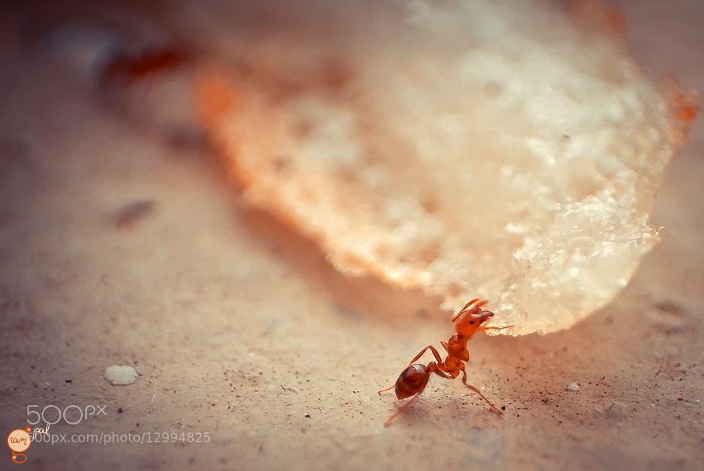 Photograph Antzzz by ramgopal rajaram on 500px