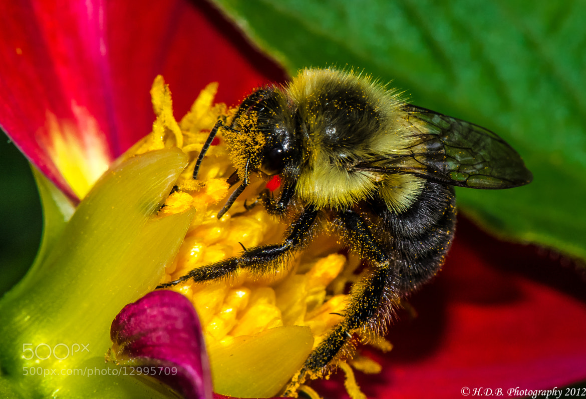 Photograph Pollen Coated by Harold Begun on 500px
