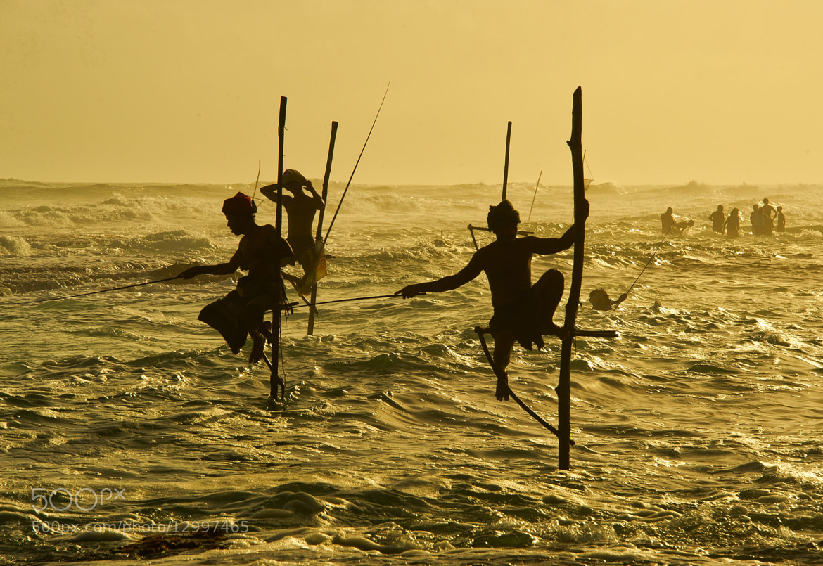 Photograph stilt fishing by hamni juni on 500px