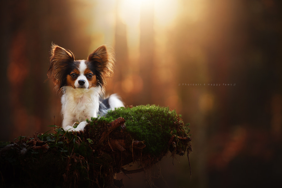 What a lovely girl by Anne Geier on 500px.com