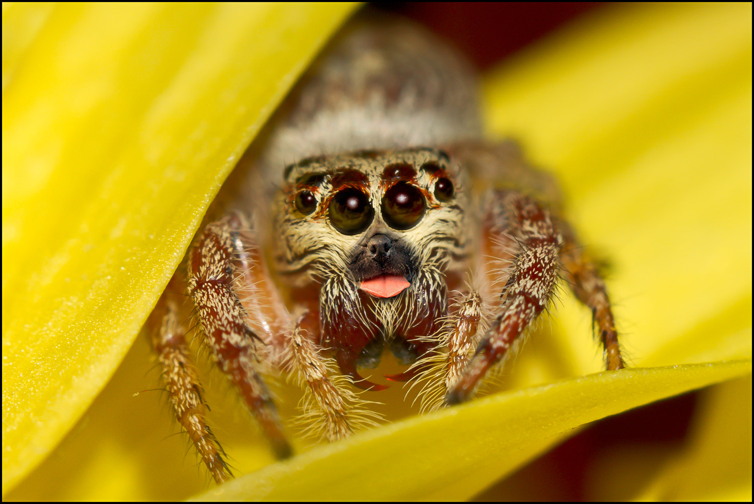 Friendly Spider by Steve Passlow - Photo 12999793 - 500px