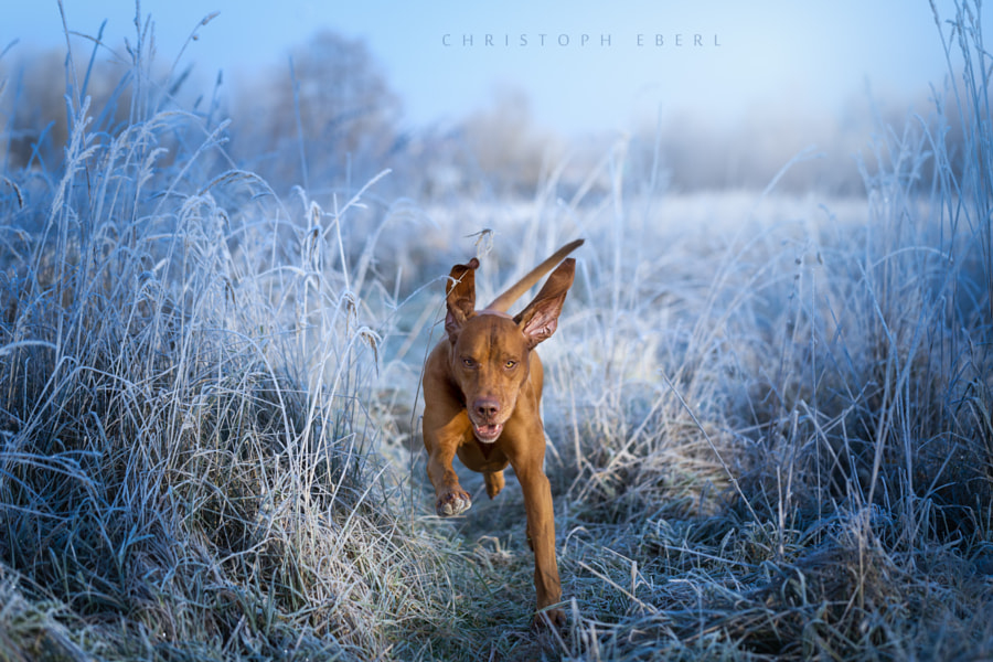 Cold Walk by Christoph Eberl on 500px.com