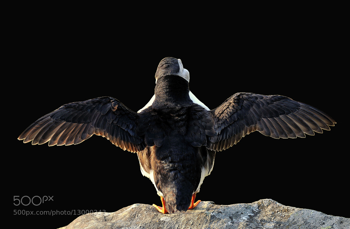 Photograph I can fly, I'm not afraid ! by Ronnie Bergström on 500px