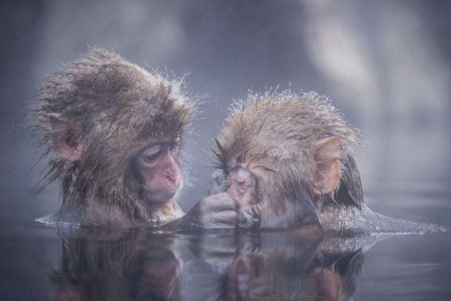 Friends by Takeshi Marumoto on 500px.com