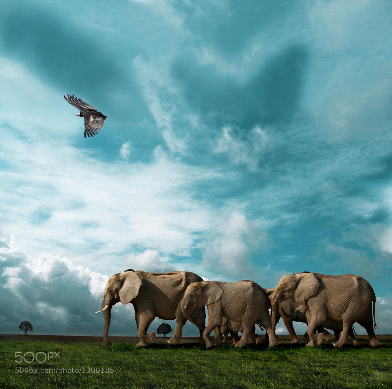 Photograph elephant walk by Sigi Kolbe on 500px