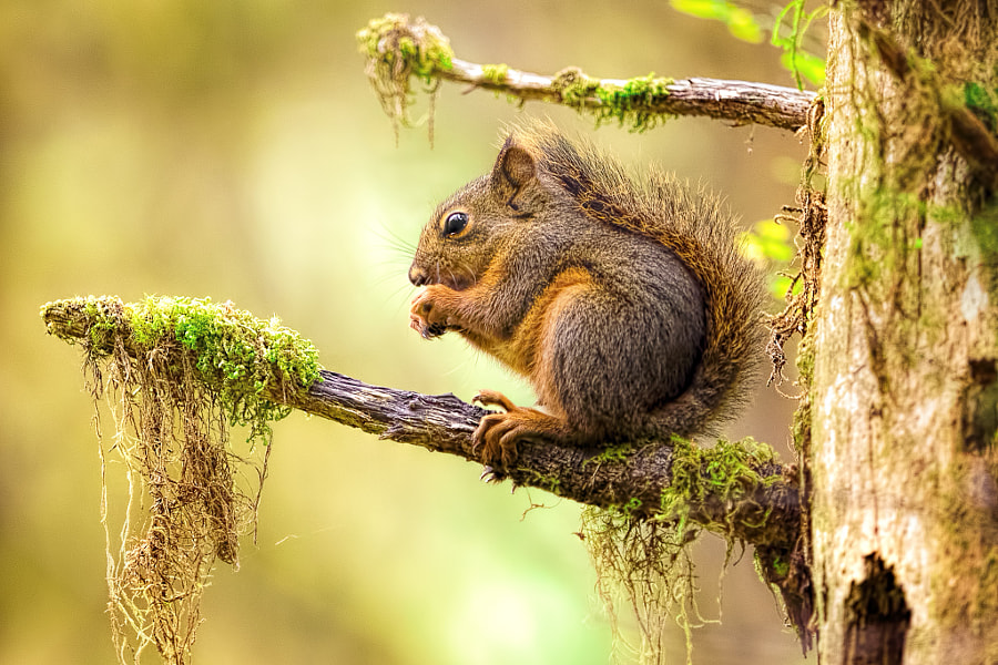 Squirrel by Dirk Seifert on 500px.com