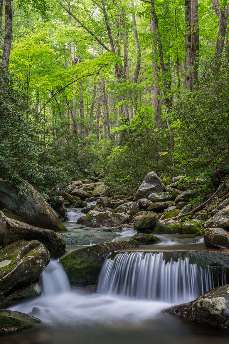 Photograph LeConte Creek - Smoky Mountains by Bill Currier on 500px