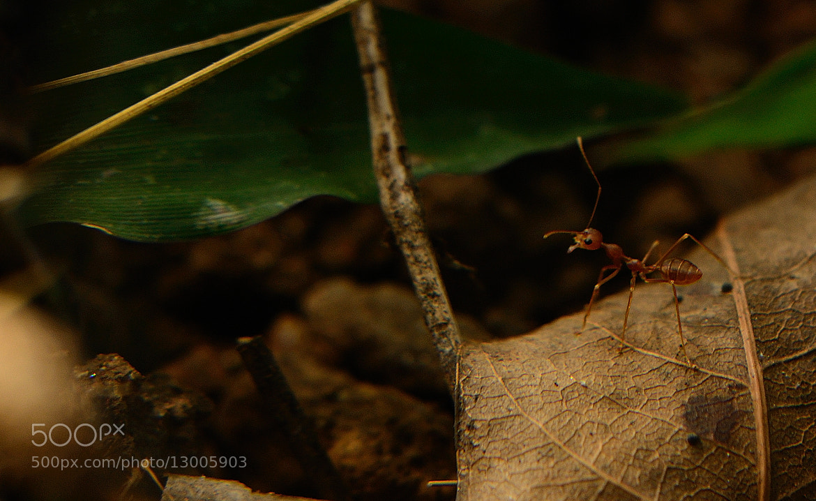 Photograph Ant story by Navin Anirudhan on 500px