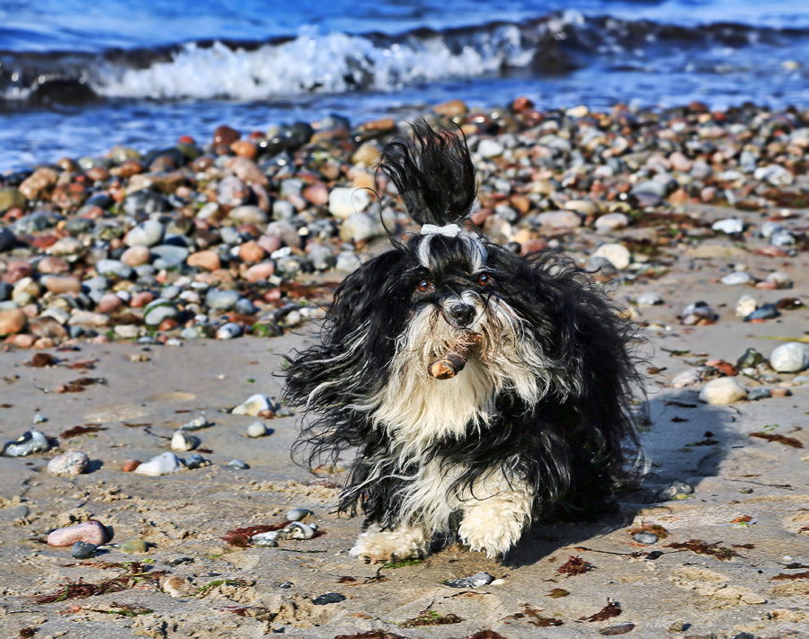 Photograph Fun on the beach by Klaus Wiese on 500px