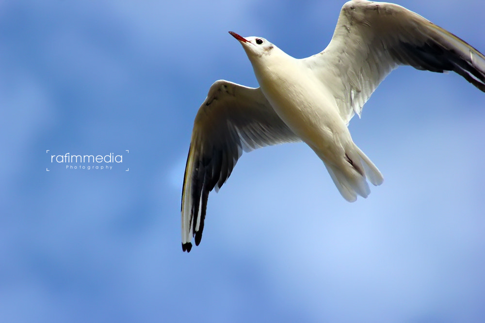 Photograph seagull by Mohamed  Rafi on 500px
