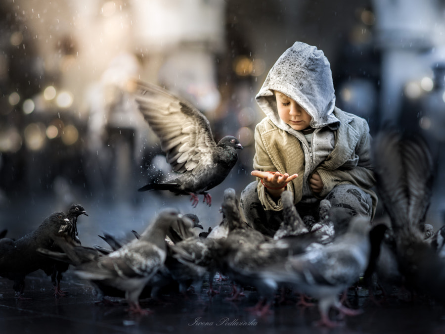 pigeons by Iwona Podlasi?ska on 500px.com