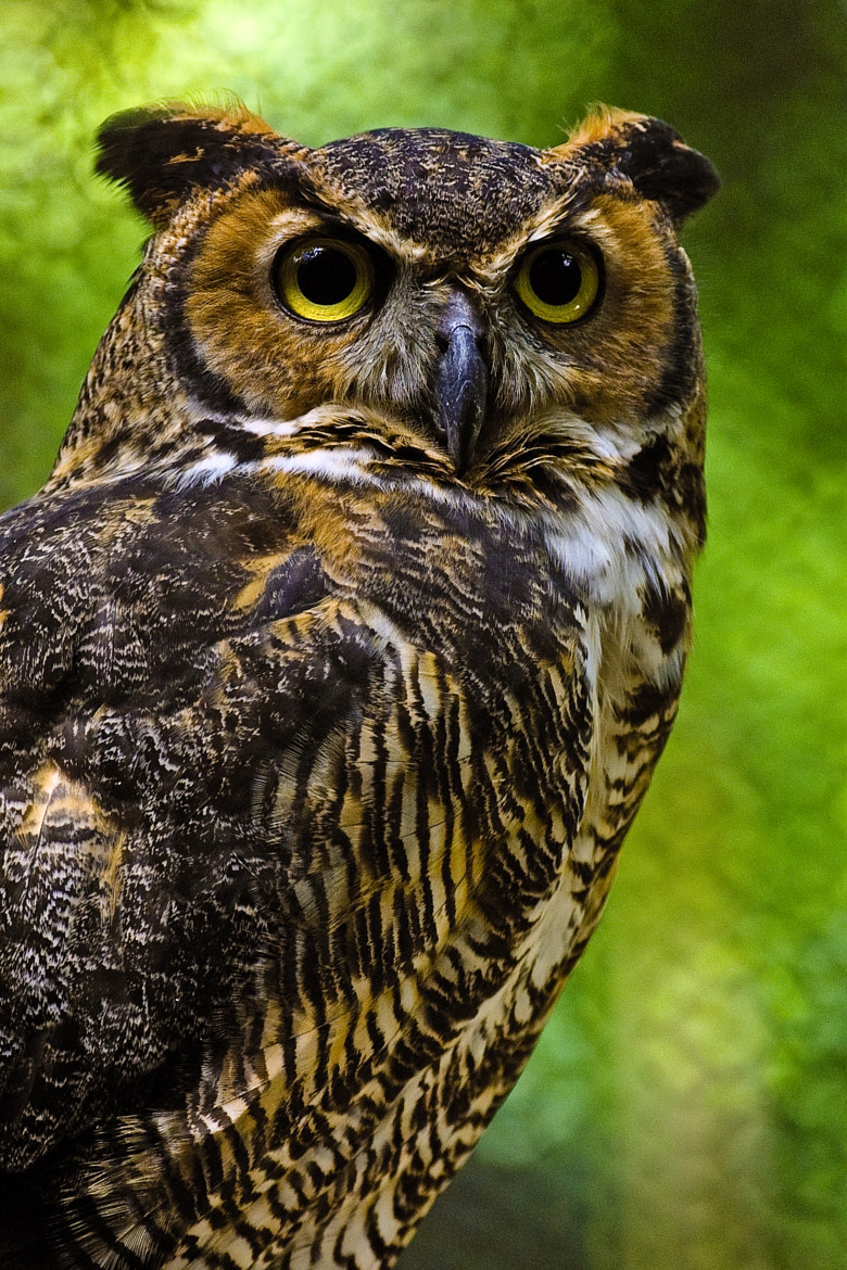 Photograph Great Horned Owl by Butch Barker on 500px