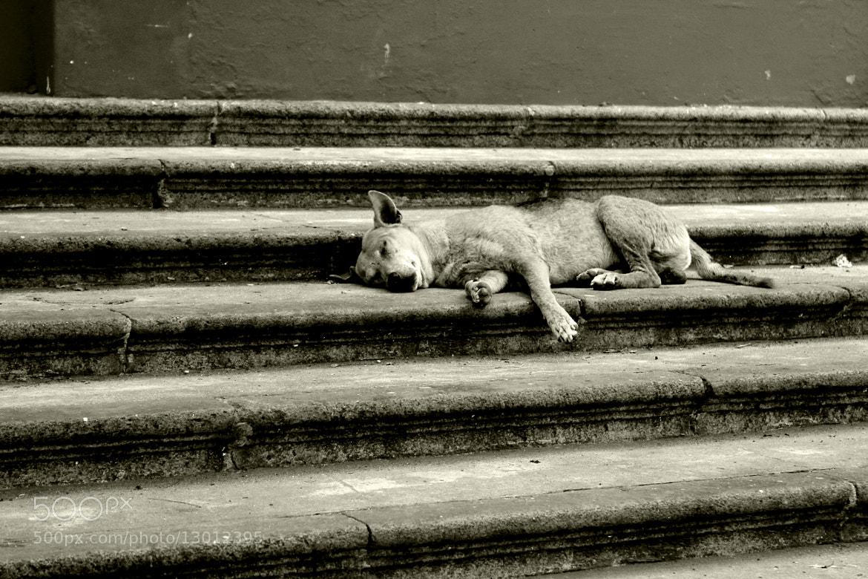 Photograph Asleep by Guru Nandha on 500px