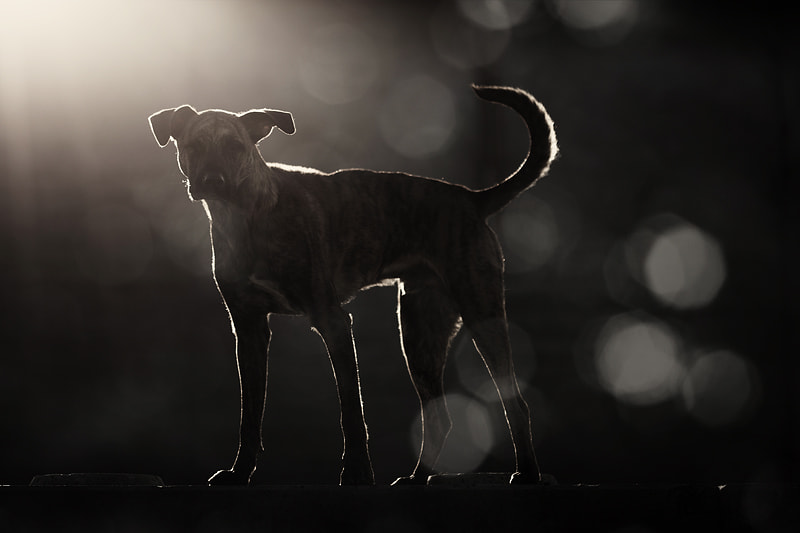 Photograph The guardian by Elke Vogelsang on 500px