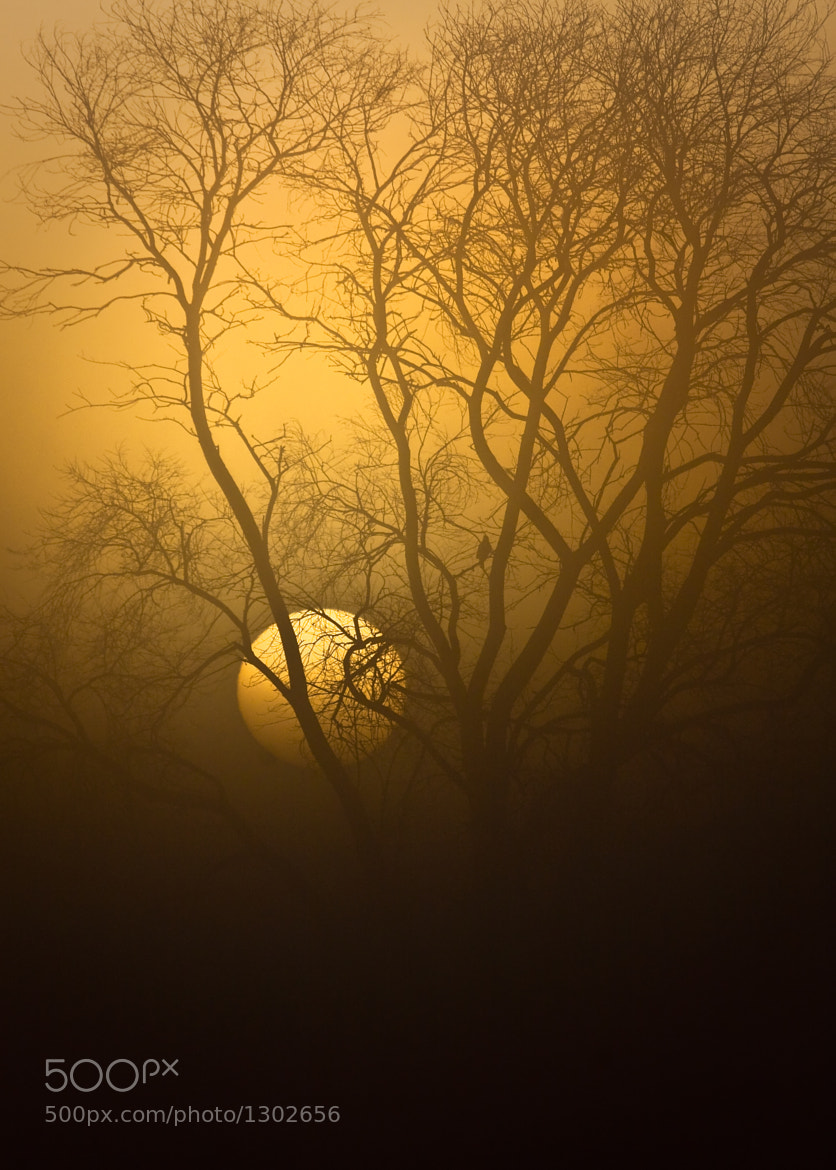 Photograph Watcher in the Fog by Mikeal Dixon on 500px