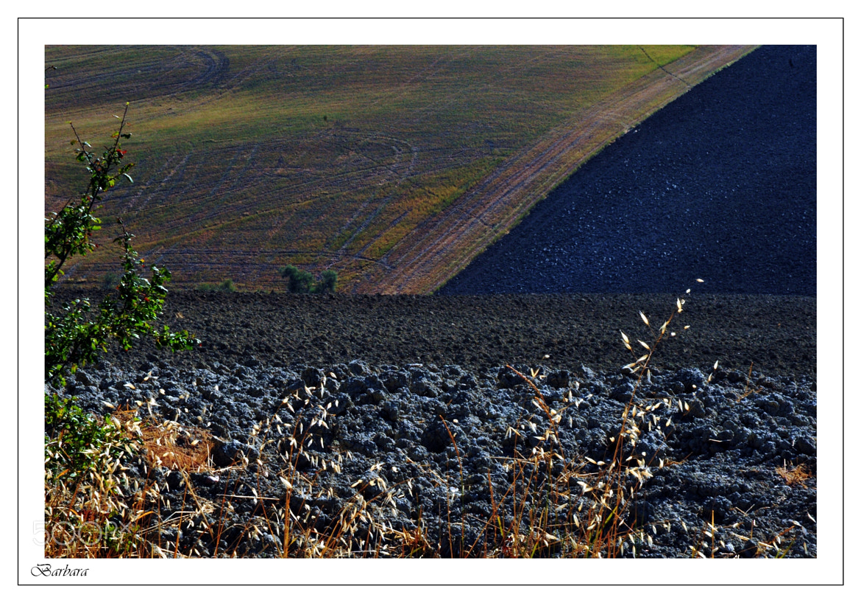 Photograph Tavullia Italy by Mauro Scalvini on 500px