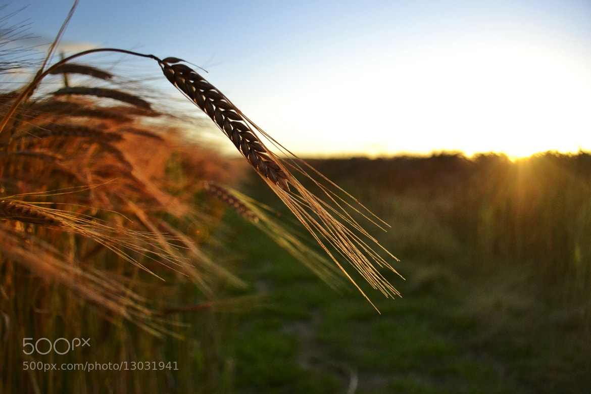 Photograph Golden crowns  by Sarah johnson on 500px
