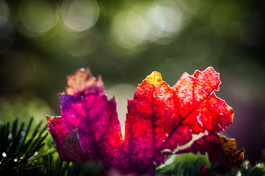 Photograph .: First Fall Boke :. by Jon Rista on 500px