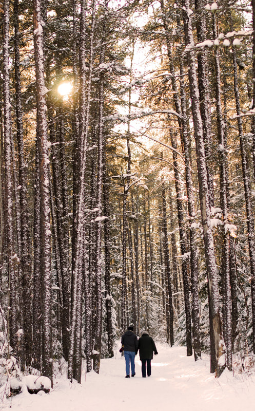 Photograph Winter by Cassandra Lee on 500px