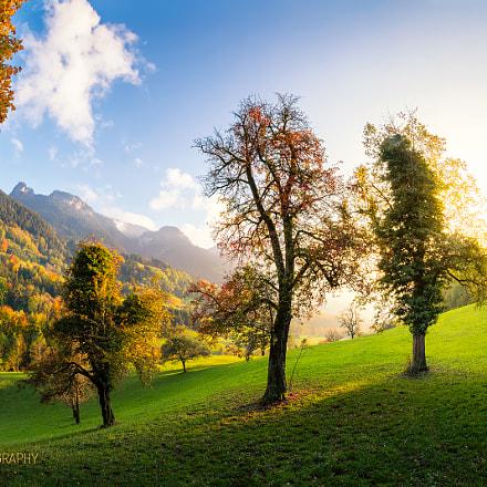 Autumnal Simplicity