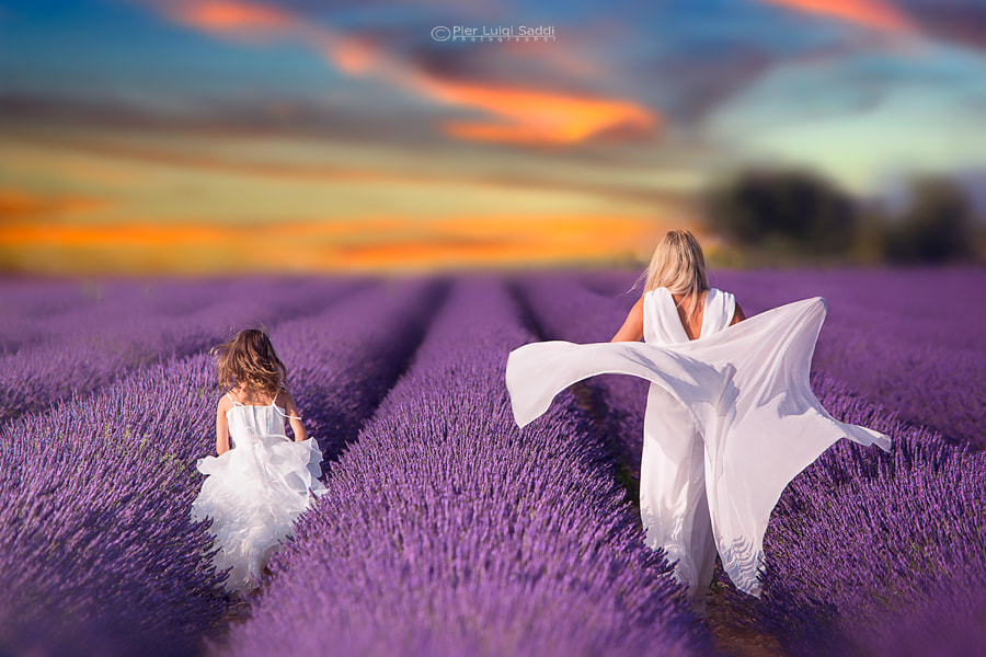 Among the colors of lavender by Pier Luigi Saddi on 500px.com