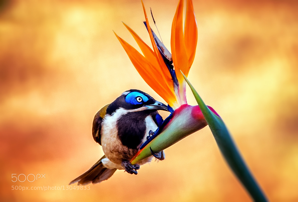 Photograph Bird in Paradise by Tracie Louise on 500px