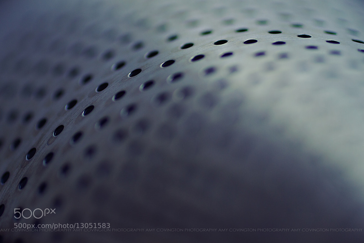 Photograph 178/365 : Perforated by Amy Covington on 500px