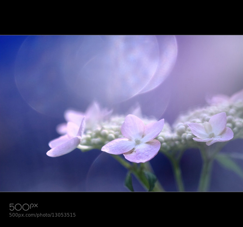 Photograph Pink Light by Shihya Kowatari on 500px