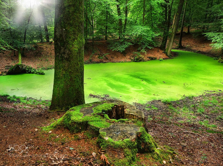 Photograph green carpet by Patrick Strik on 500px